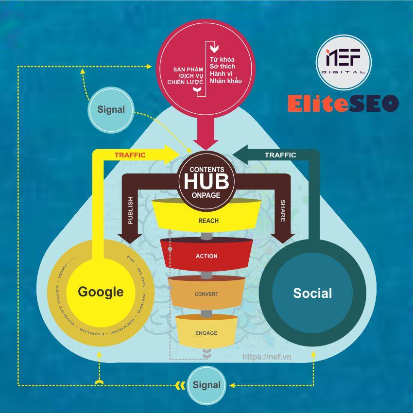 Hub content trong chiến lược Elite SEO tại Nef Digital