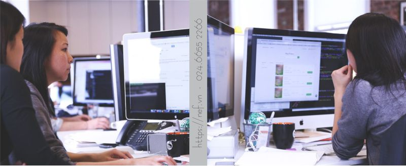 Dịch vụ SEO tổng thể website tại Nef Digital