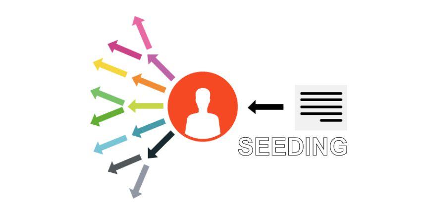 Seeding Là Gì? Hiểu Và Áp Dụng Chiến Dịch Seeding Hiệu Quả